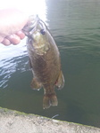 120716利根川中上流域単独釣行